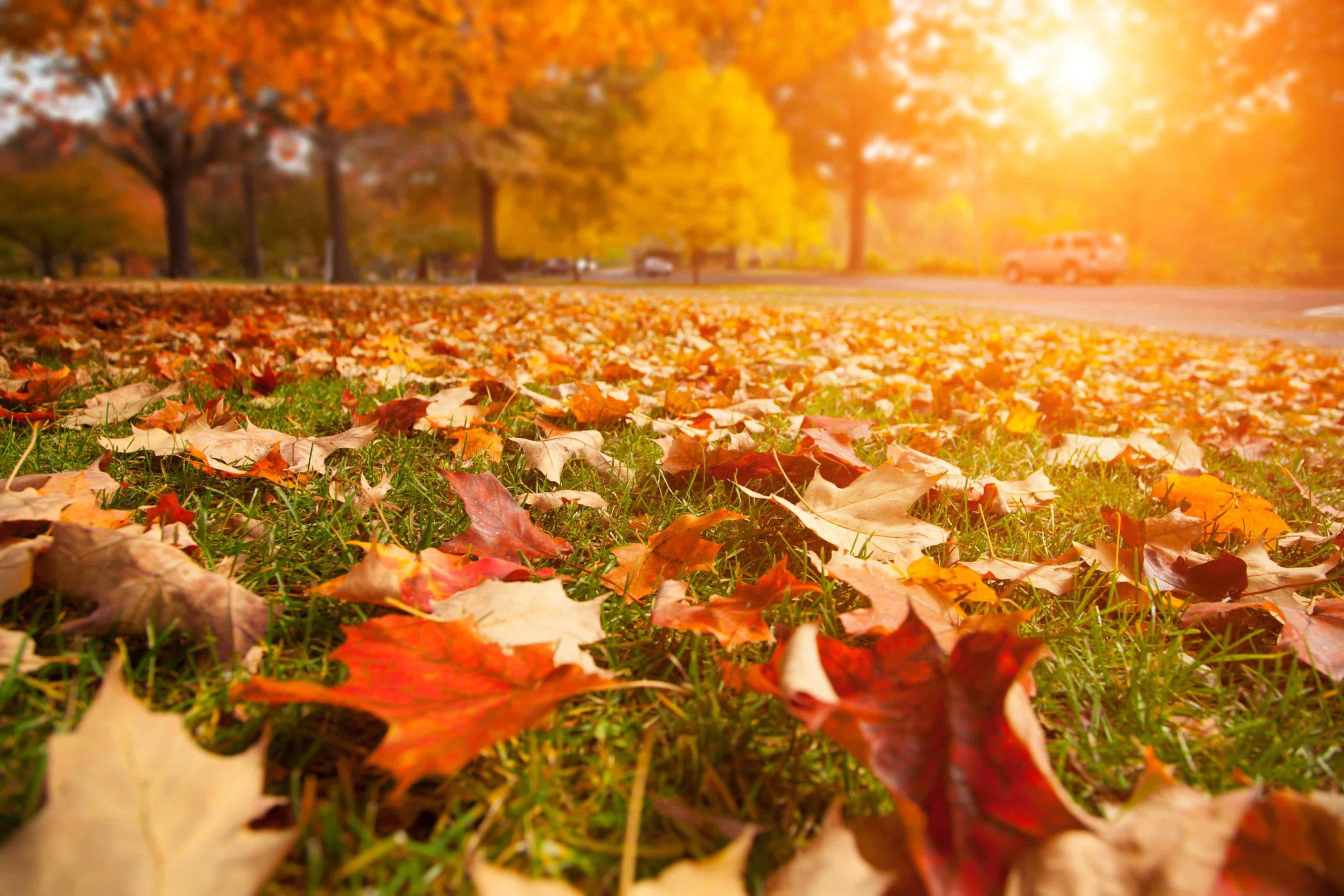 Meilleures huiles essentielles pour l'automne et 30 recettes spéciales d'automne essayées et testées! |